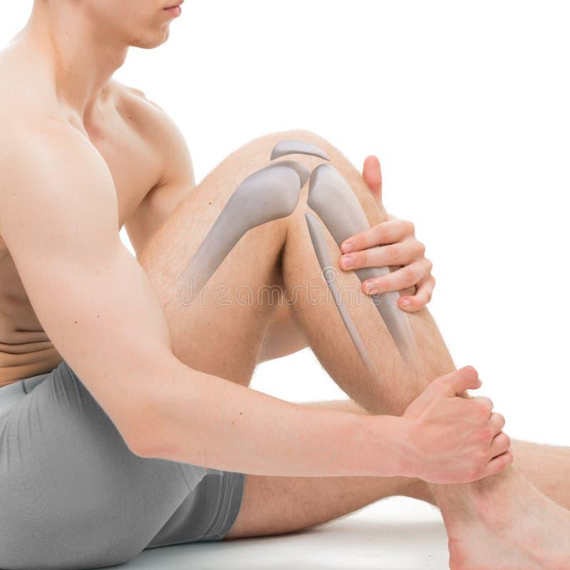 Knee Bone Anatomy isolated on white stock images