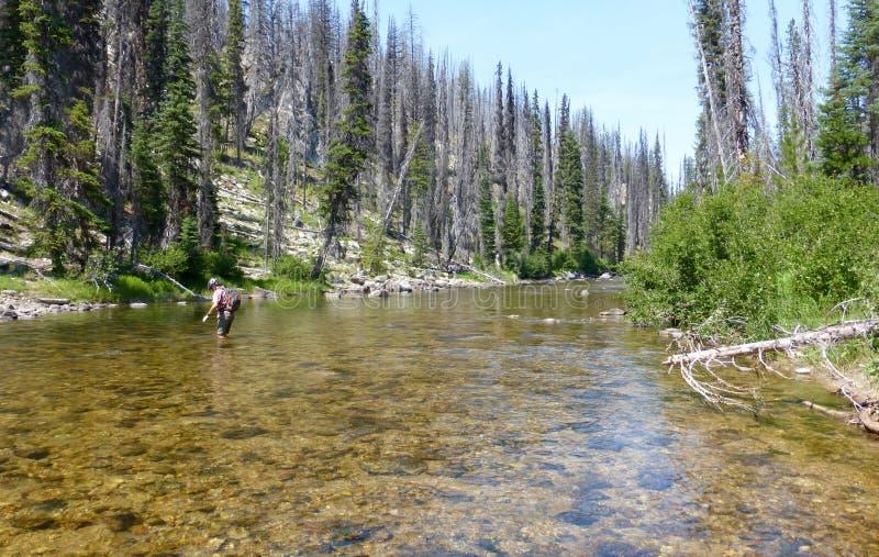 Wading across a mountain stream royalty free stock photos