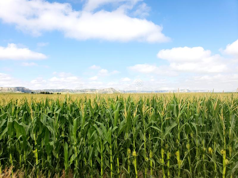 Knee High by Fourth of July stock photography