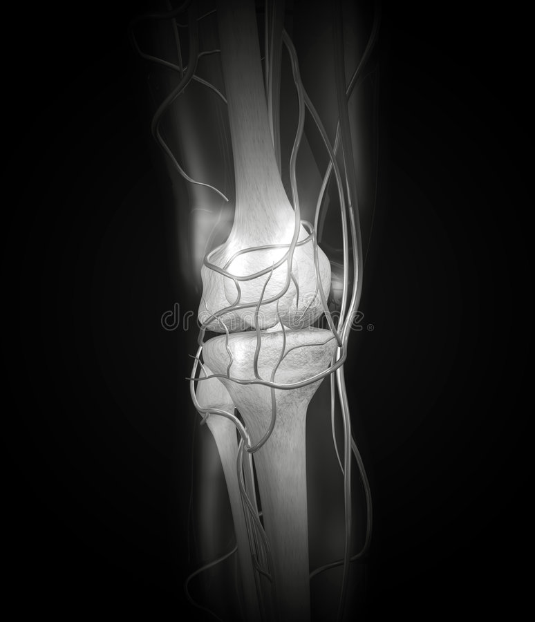 Download Knee X-ray Arteries, Bones stock illustration. Image of bones - 3027230