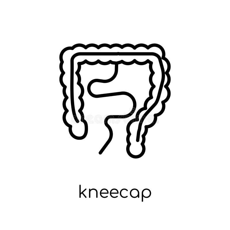 Kneecap icon. Trendy modern flat linear vector Kneecap icon on w royalty free illustration