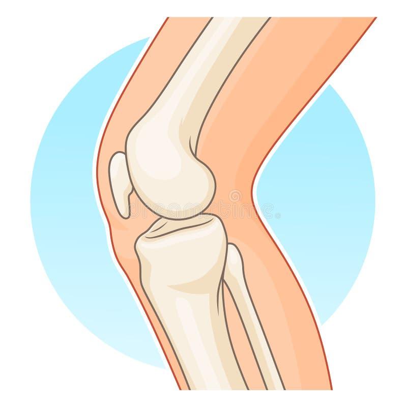 Knie-gezamenlijk zijaanzicht stock illustratie