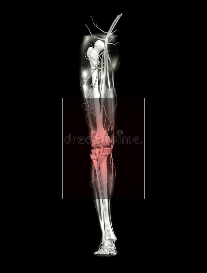 Knie-Schmerz, Vorderansicht stock abbildung