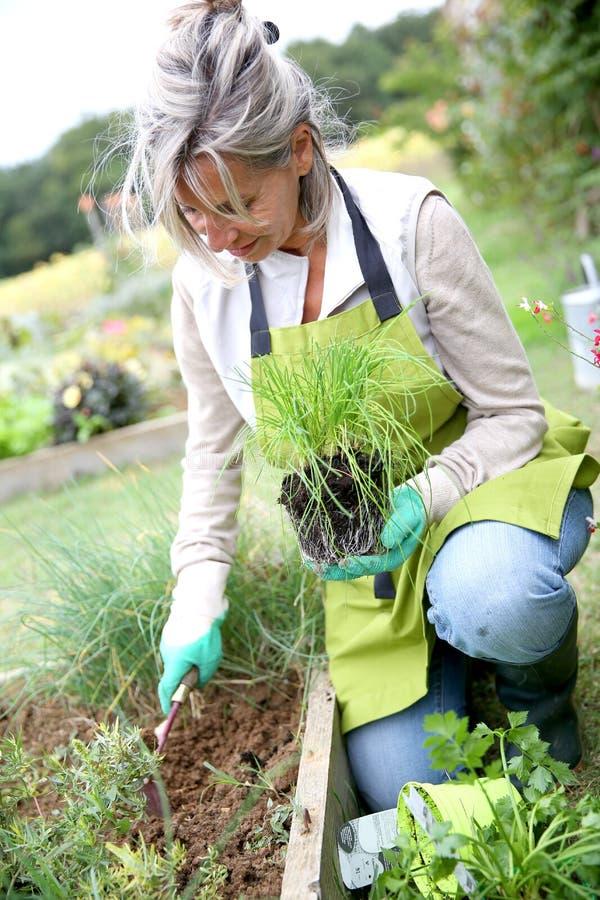 Knielende vrouw die met handschoenen tuinieren stock afbeeldingen