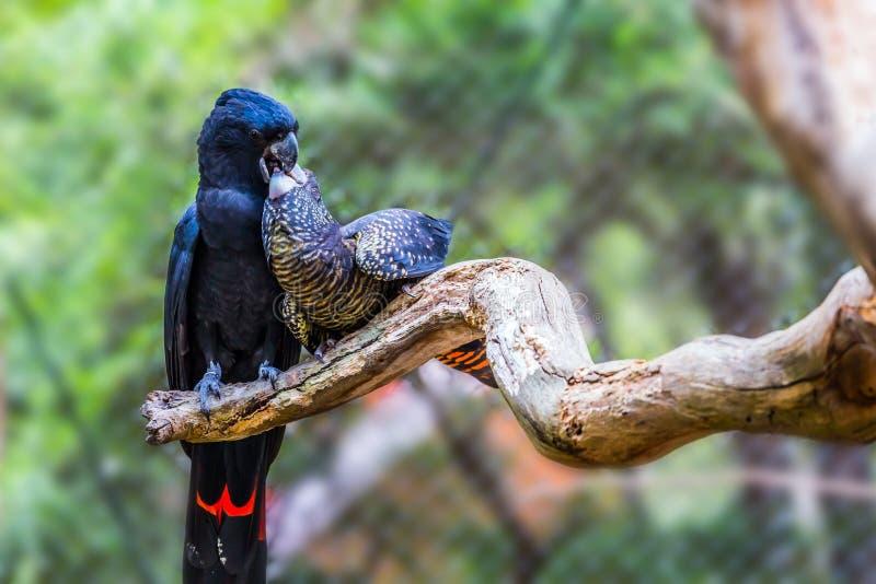 Knip van papegaaien stock foto's