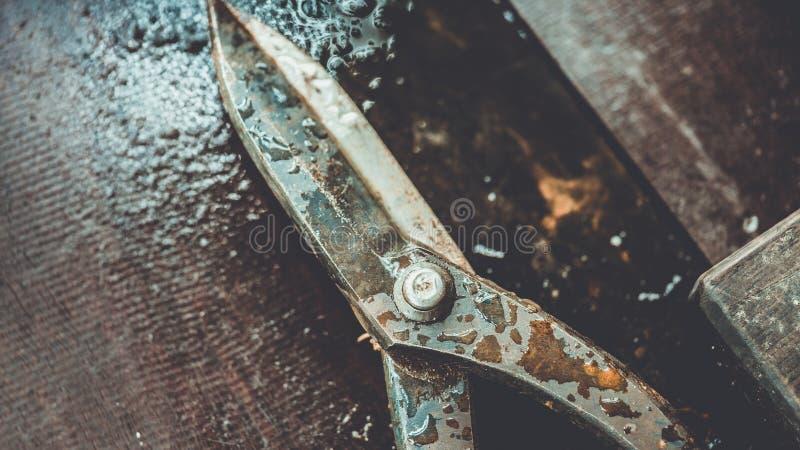 Knipt de tuin Scherpe Schaar Hulpmiddel stock foto's