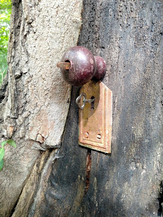 Whimsical Tree Door royalty free stock images