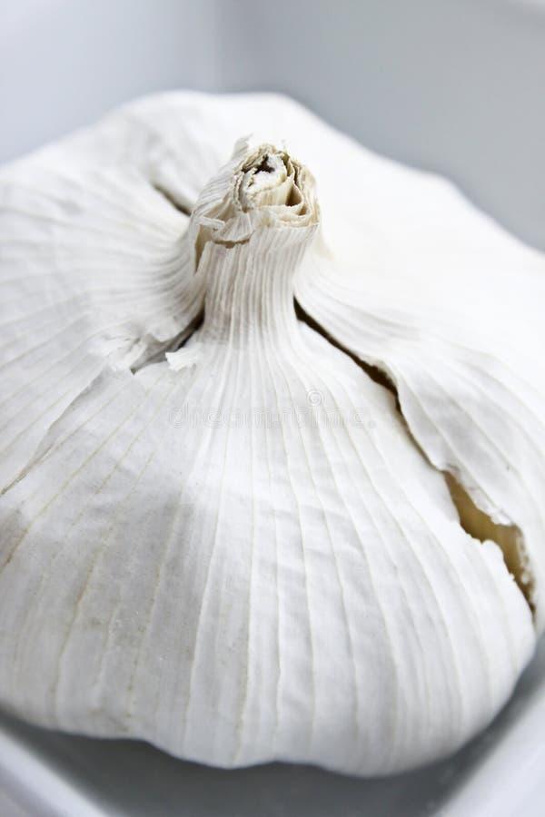 Knoblauch-Fühler stockfoto