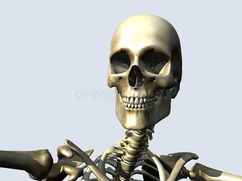 Knochen 12 stock abbildung