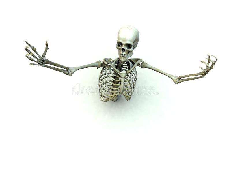 Knochen 12 vektor abbildung