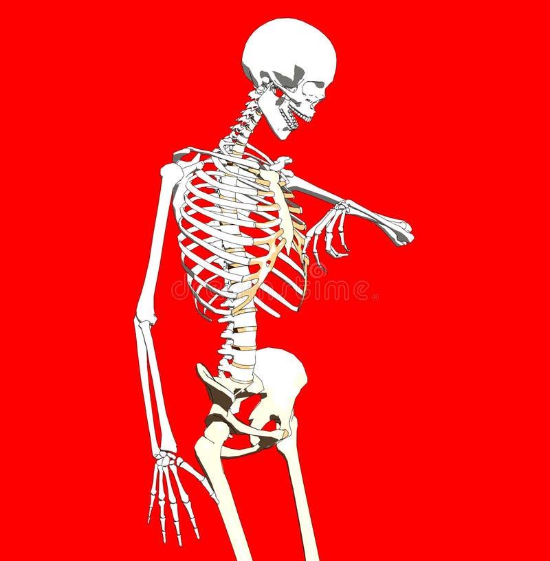 Knochen 238 stock abbildung