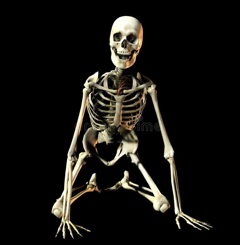 Knochen 6 vektor abbildung