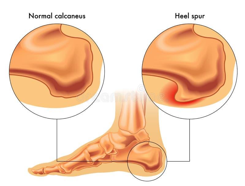 Knochen des Fußes und des Knöchels vektor abbildung