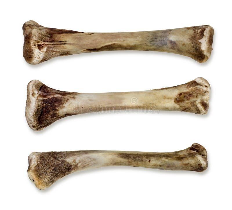 Knochen - getrennt stockfoto. Bild von verschlungen, kalzium - 7966100
