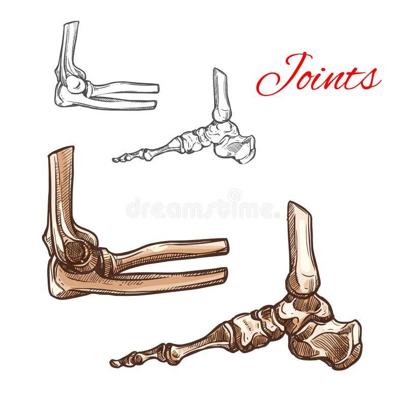 Knochen- und Gelenkskizze des menschlichen Fußes, Ellbogen, Knöchel lizenzfreie abbildung