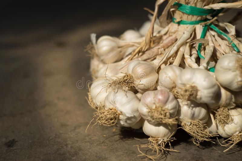 Knoflook in een close-upschot stock fotografie