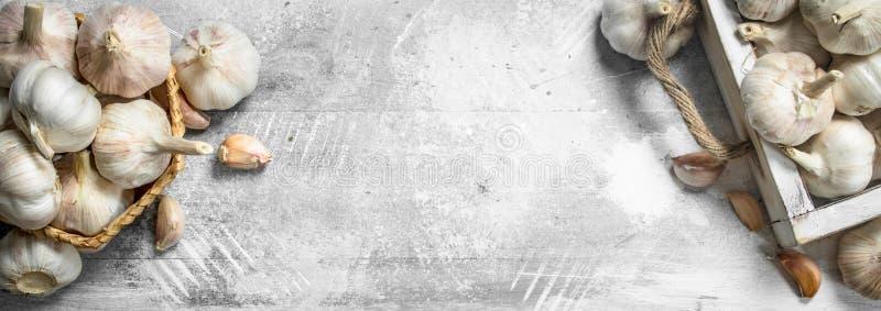 Knoflook in mand stock afbeelding