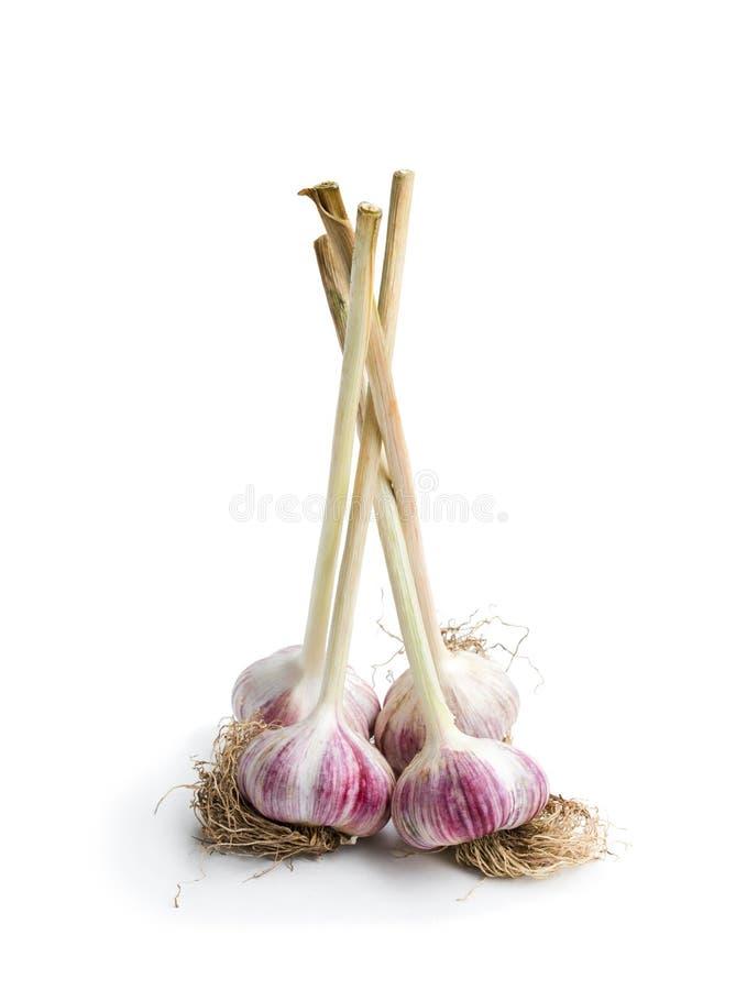 Knoflookbollen met stam en wortel op wit wordt geïsoleerd dat stock fotografie