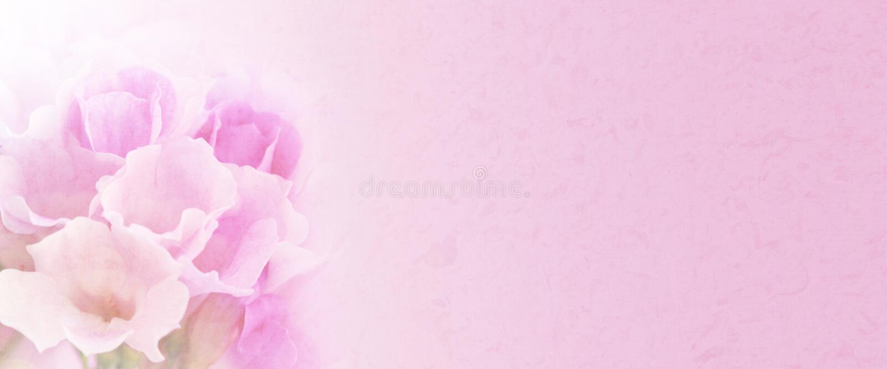 Knoflookwijnstok het bloeien (Mansoa-alliacea) Zoete kleurenbloem in zachte en onduidelijk beeldstijl met ruimte voor tekst royalty-vrije stock foto