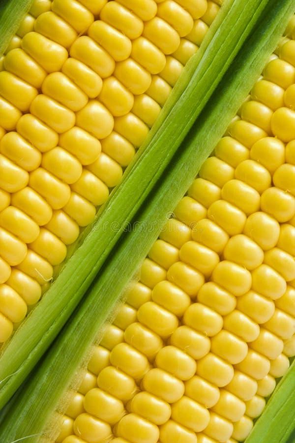 Knol op de maïskolf stock afbeeldingen