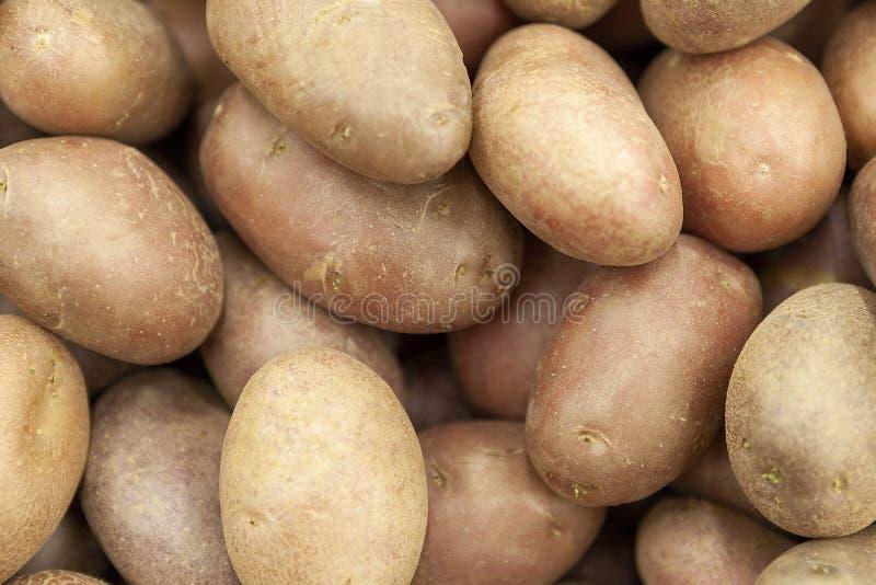 Knollen van rode zuivere aardappels in het winkelvenster stock foto
