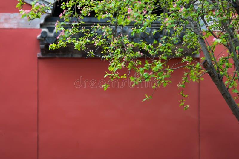 Knoppar av blommor av att blomma för äpple royaltyfri bild