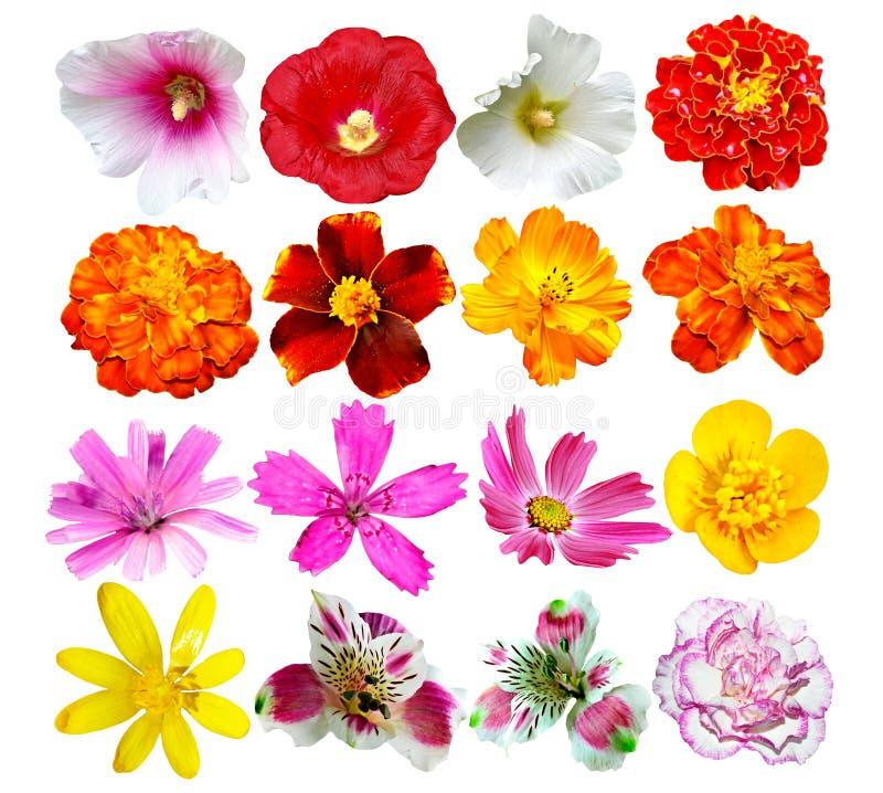 Knoppen van kleurrijke bloemen stock fotografie