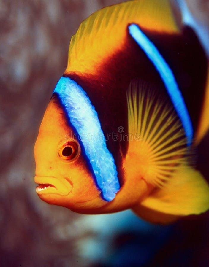 Download Knorrig stock foto. Afbeelding bestaande uit tropisch, anemone - 28966