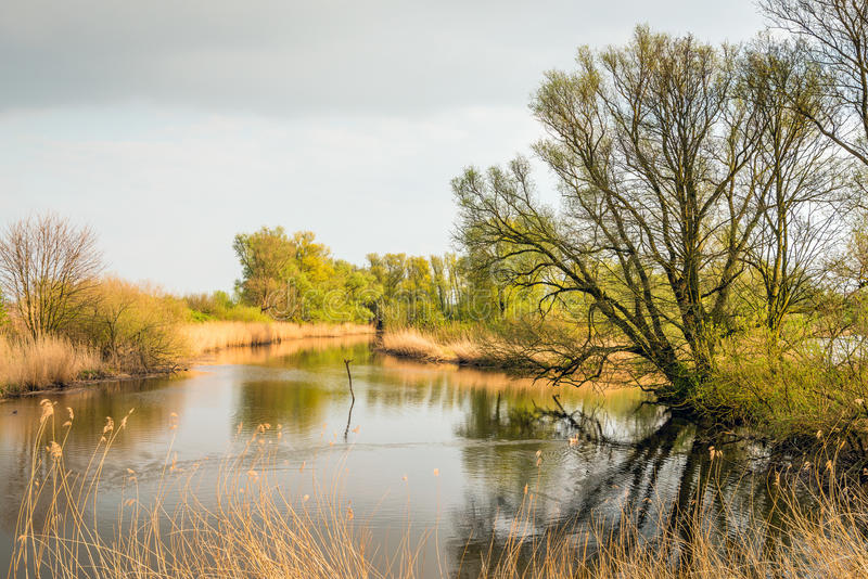 Knospungsbäume reflektierten sich in der Wasseroberfläche eines Nebenflusses lizenzfreies stockfoto