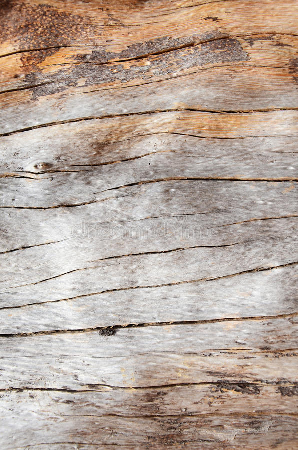 Knot wood Background. A knot is a particular type of imperfection in a piece of wood; it will affect the technical properties of the wood, usually for the worse royalty free stock images
