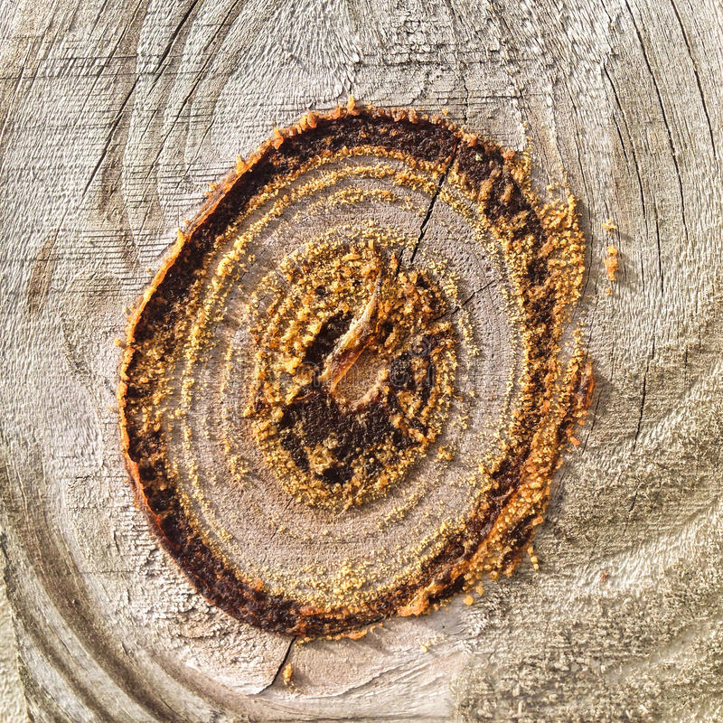 Knot in wood on a fence stock photography