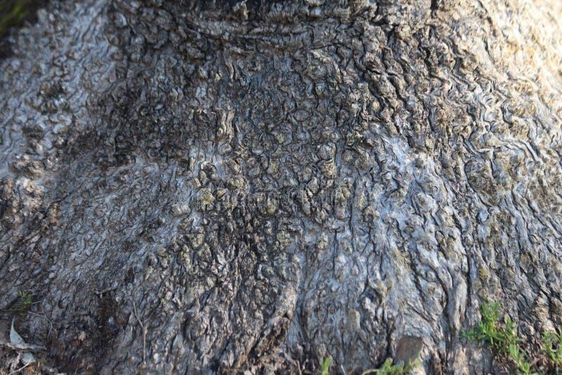 Knoten vom Kasten-Baum lizenzfreie stockbilder