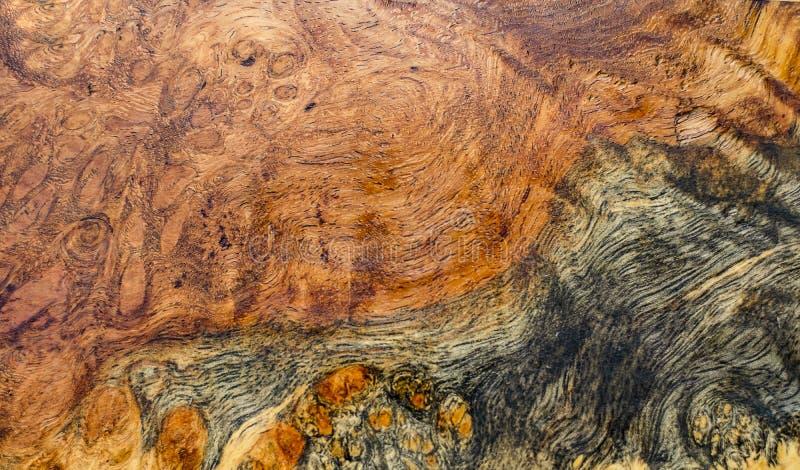Knotenholz gestreift für Bilddruck-Innenausstattungsauto, exotisches hölzernes schönes Muster für Handwerk oder abstrakte Kunst t stockfotos