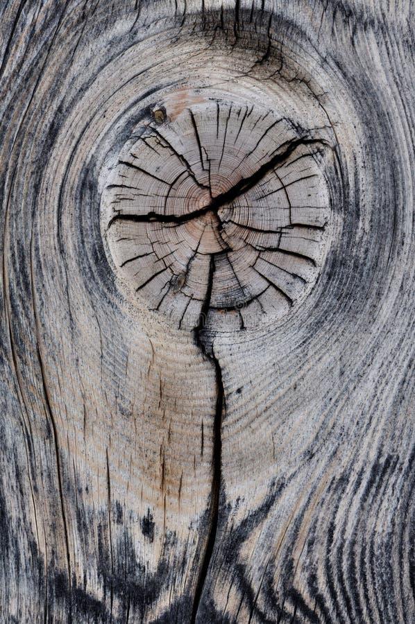 Knotenpunkt auf einem Stück des toten Baums lizenzfreie stockfotografie
