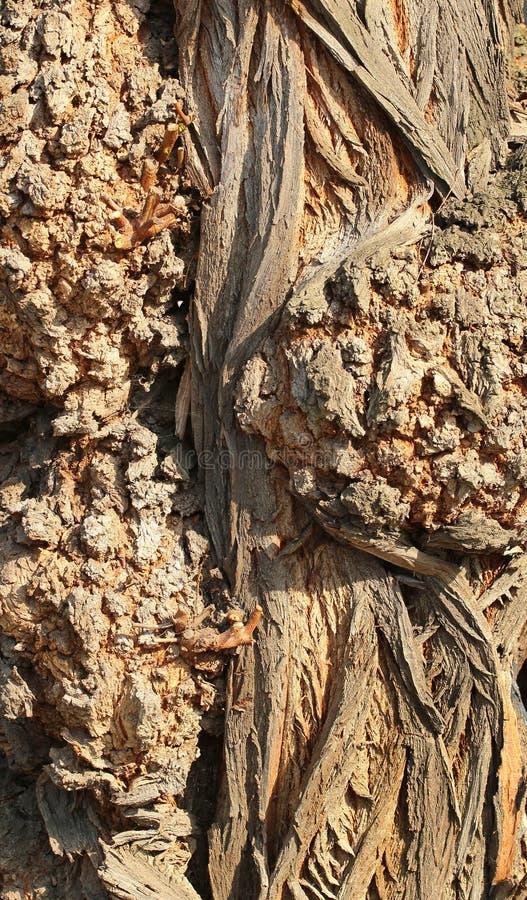 Knotig closeup för textur för trädstam royaltyfri foto