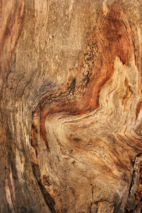 Knotig trädcloseuptextur arkivbilder