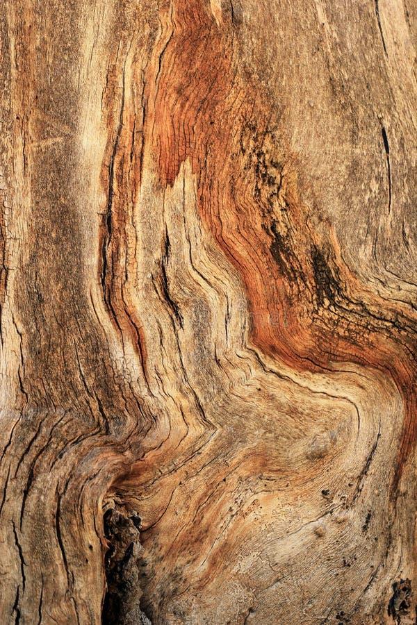 Knotig trädcloseuptextur royaltyfria bilder