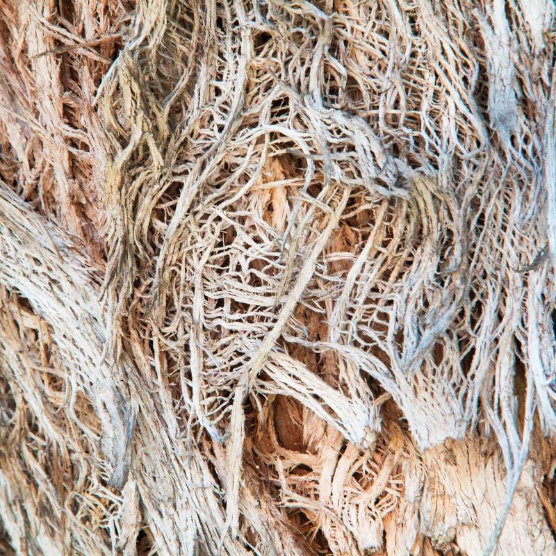 Knotig trädstam för trådig skalning arkivbilder