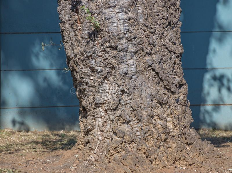 Knotig trädstam som utomhus isoleras royaltyfria foton