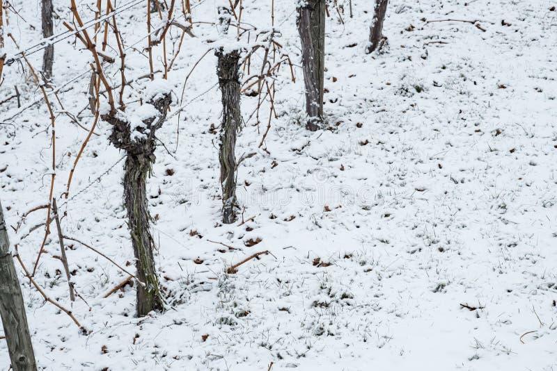 Download Knotige Reben Im Schnee Des Winters Stockfoto - Bild von eintragfäden, deutschland: 90236956