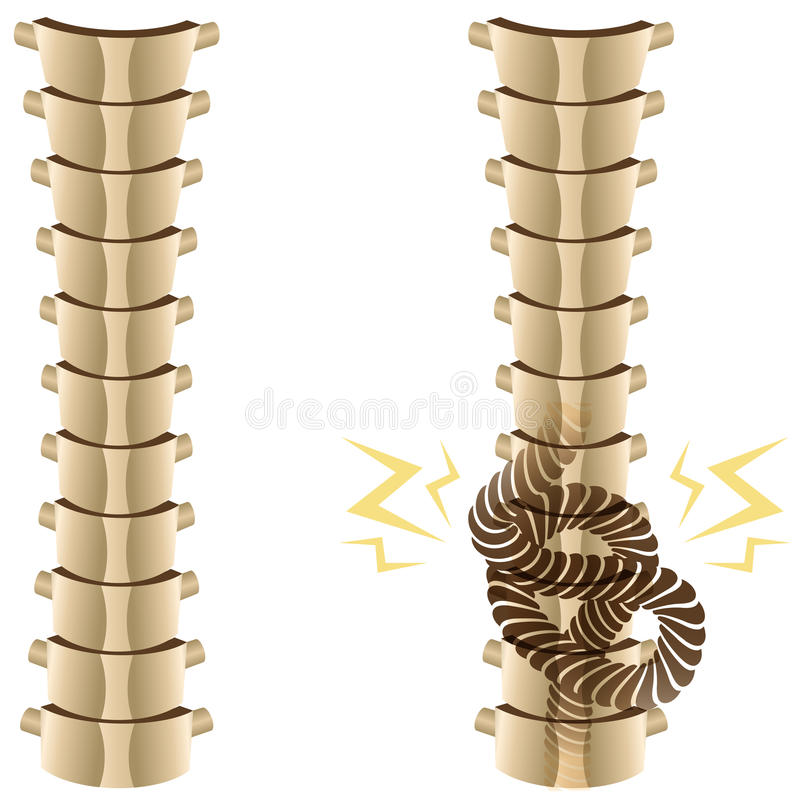 Knotted Spine stock illustration