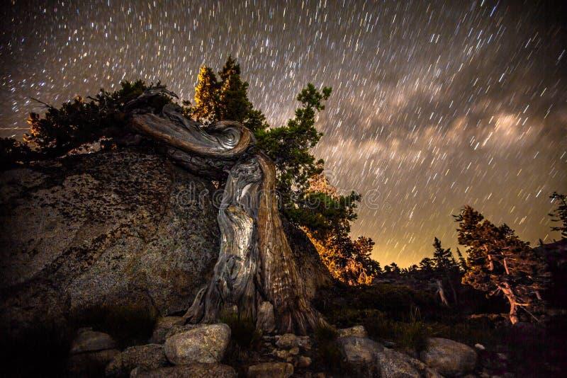 Knotty träd mot stjärnklar natt royaltyfria bilder