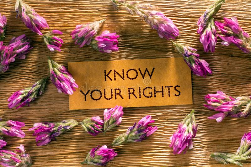 KNOW YOUR RIGHTS. In looking memo on white wood with beautiful blue flowers around stock image