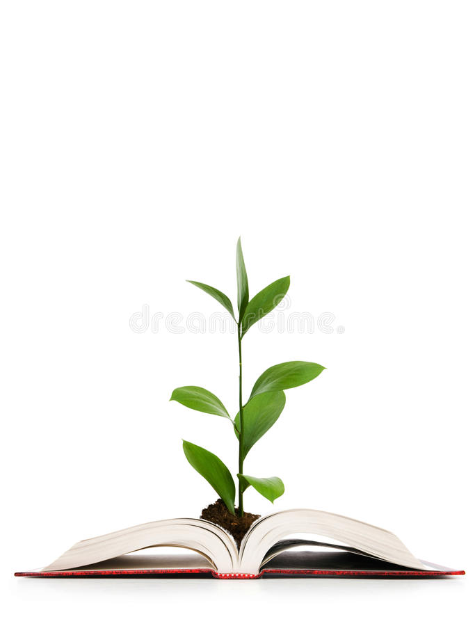 Download Knowledge Concept - Leaves Growing Out Of The Book Stock Photo - Image: 18770628