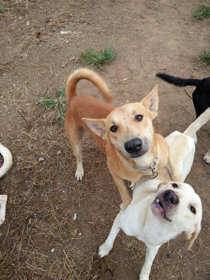 knuffeltijd voor dichte honden royalty-vrije stock afbeelding