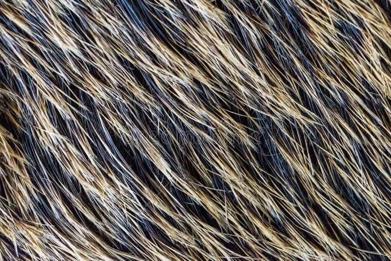Knur skóry i futerka tekstura, przyrody zwierzęcy tło, zakończenie up obrazy stock