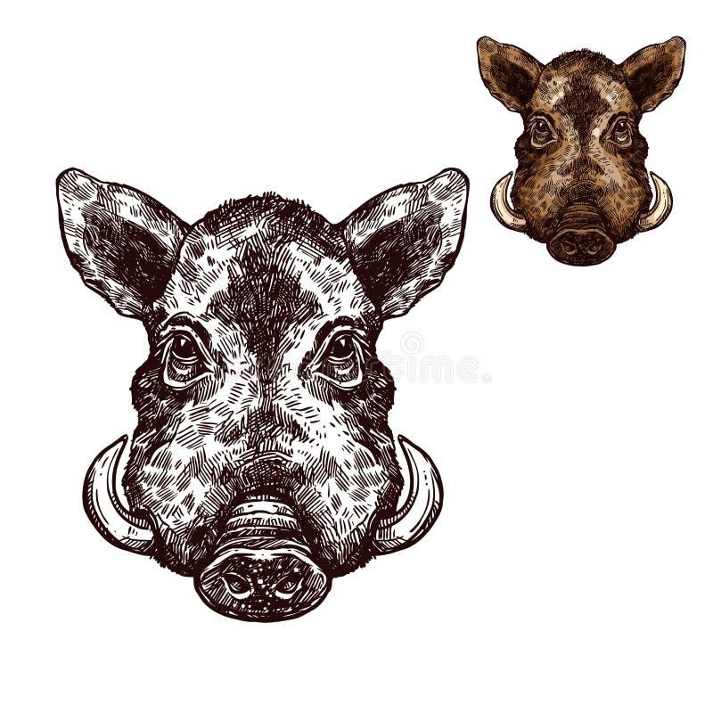 Knura aper kagana nakreślenia wektorowy dzikie zwierzę ilustracja wektor