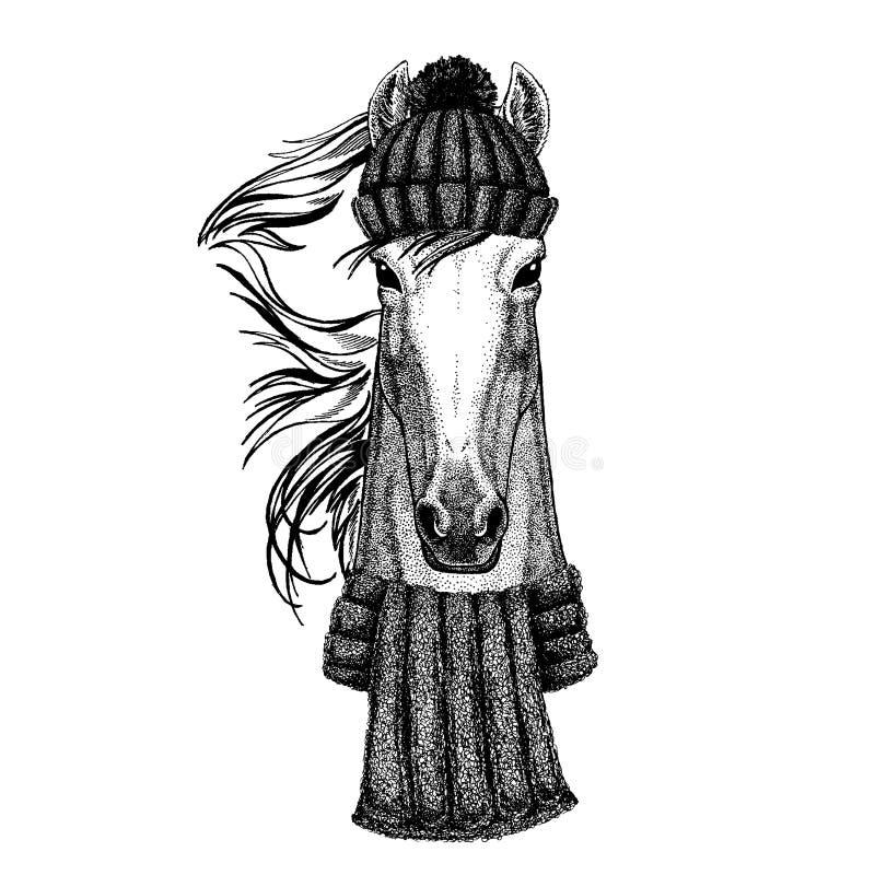 Koń, hossa, rycerz, rumak, courser Chłodno zwierzę jest ubranym trykotowego zima kapelusz Ciepła pióropuszu beanie bożych narodze ilustracji