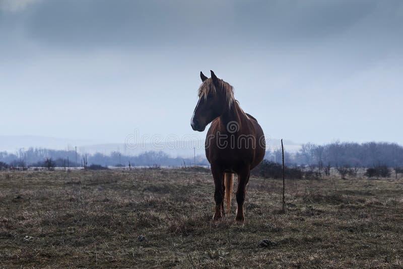 Koń w mgle, zdjęcie stock