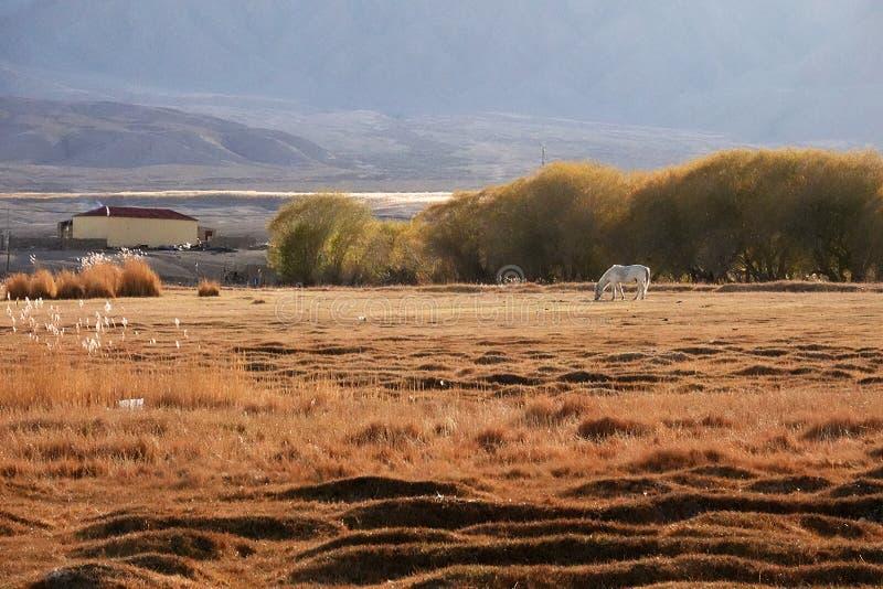 Końska i mała wioska przy stopą Śnieżna góra na Pamirs w spadku obrazy stock